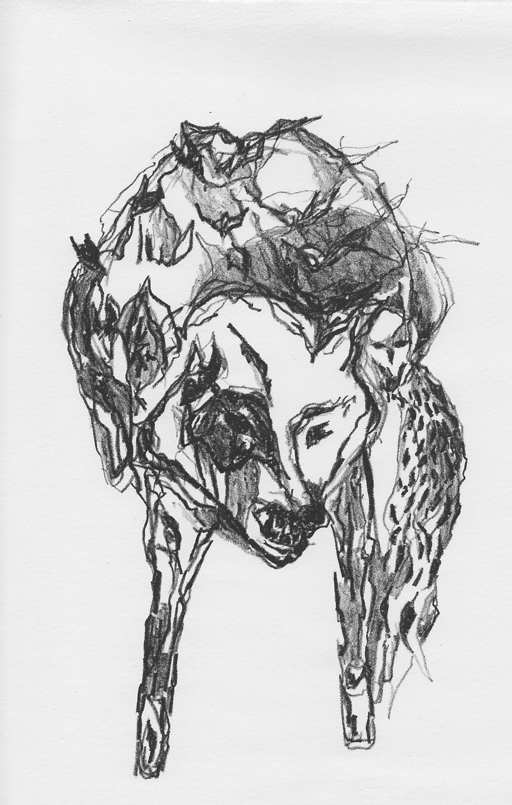 wolf.face_0001.jpg