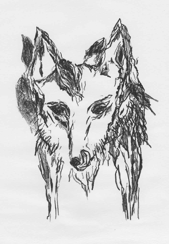 wolf.face.jpg