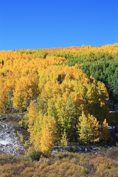 Colorado Aspens :: Set the Table