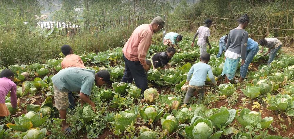 ethiopian-villageers-lettuce.jpg