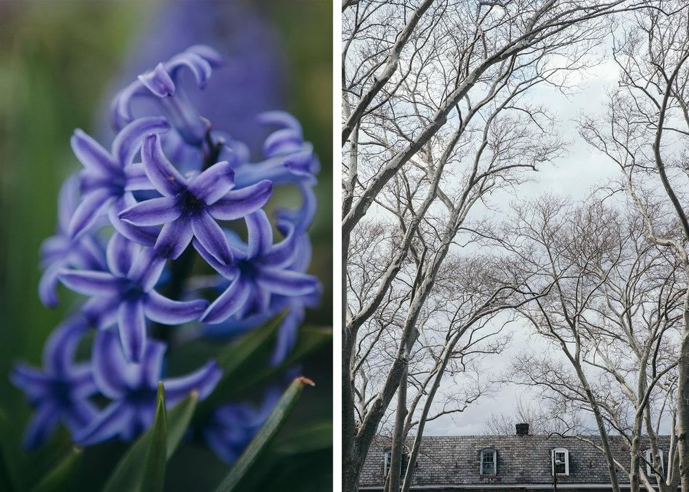 spring-4.jpg