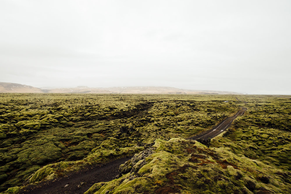 Looking out at the mossy lava fields during our drive east on day 2.
