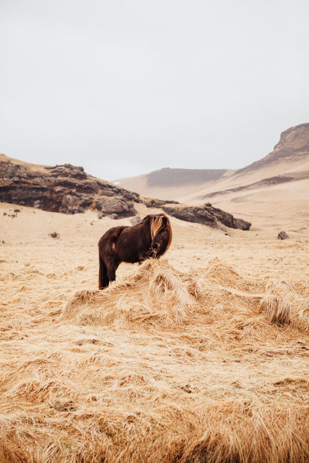 We saw a ton of Icelandic ponies, but many were too far from the road for photo ops. After this one we saw (and said hi to) a ton.