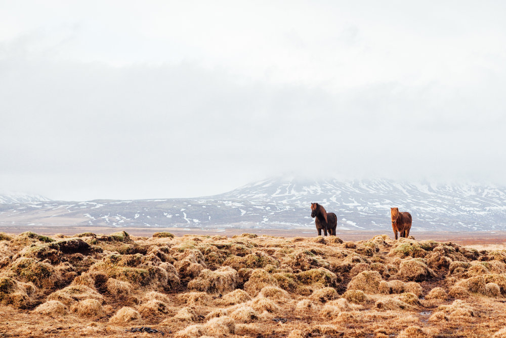 Had to finish the photo series with a pony shot, of course! This was taken on the way to our last stop on the Golden Circle, (the Kerid Crater - which didn't make for great photos) before we headed to our Reykjavik hotel to crash before flying out the next morning.