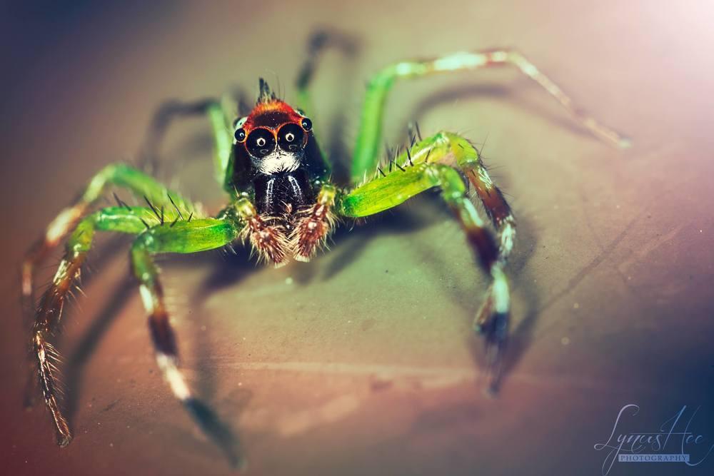 Monkey Spider.jpg