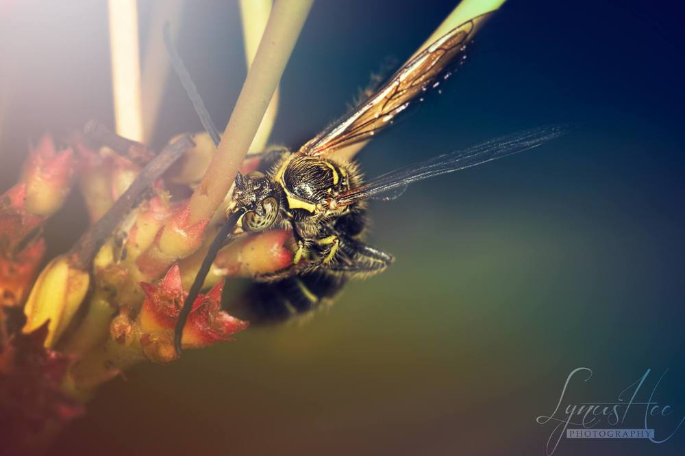 Wasp2.jpg