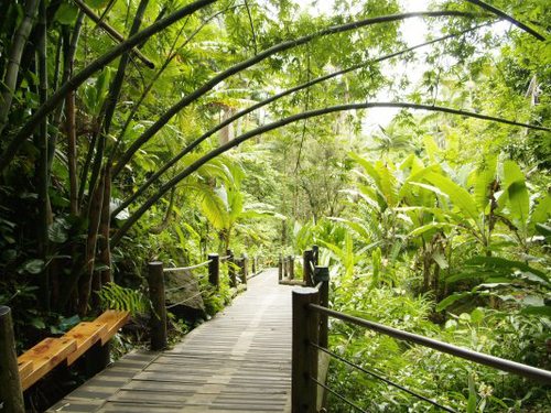 Tropical Botanical Gardens