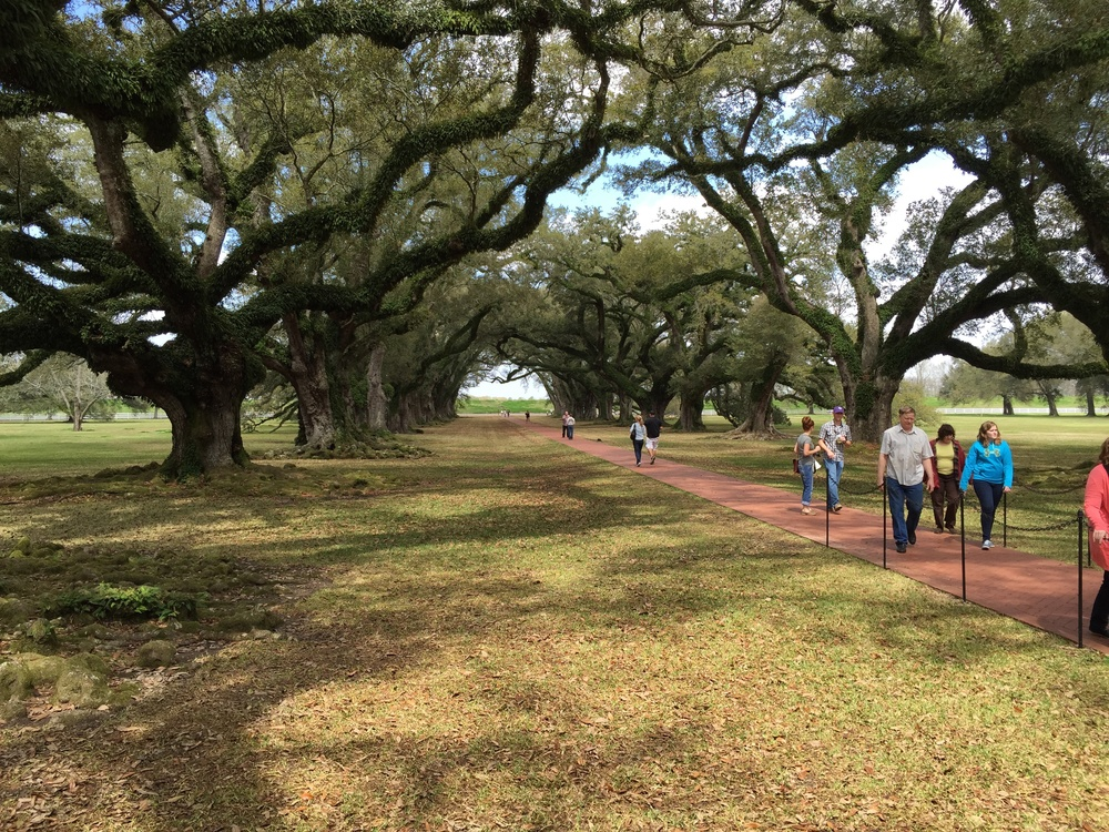 Oak Alley's avenue of Virginia live oaks