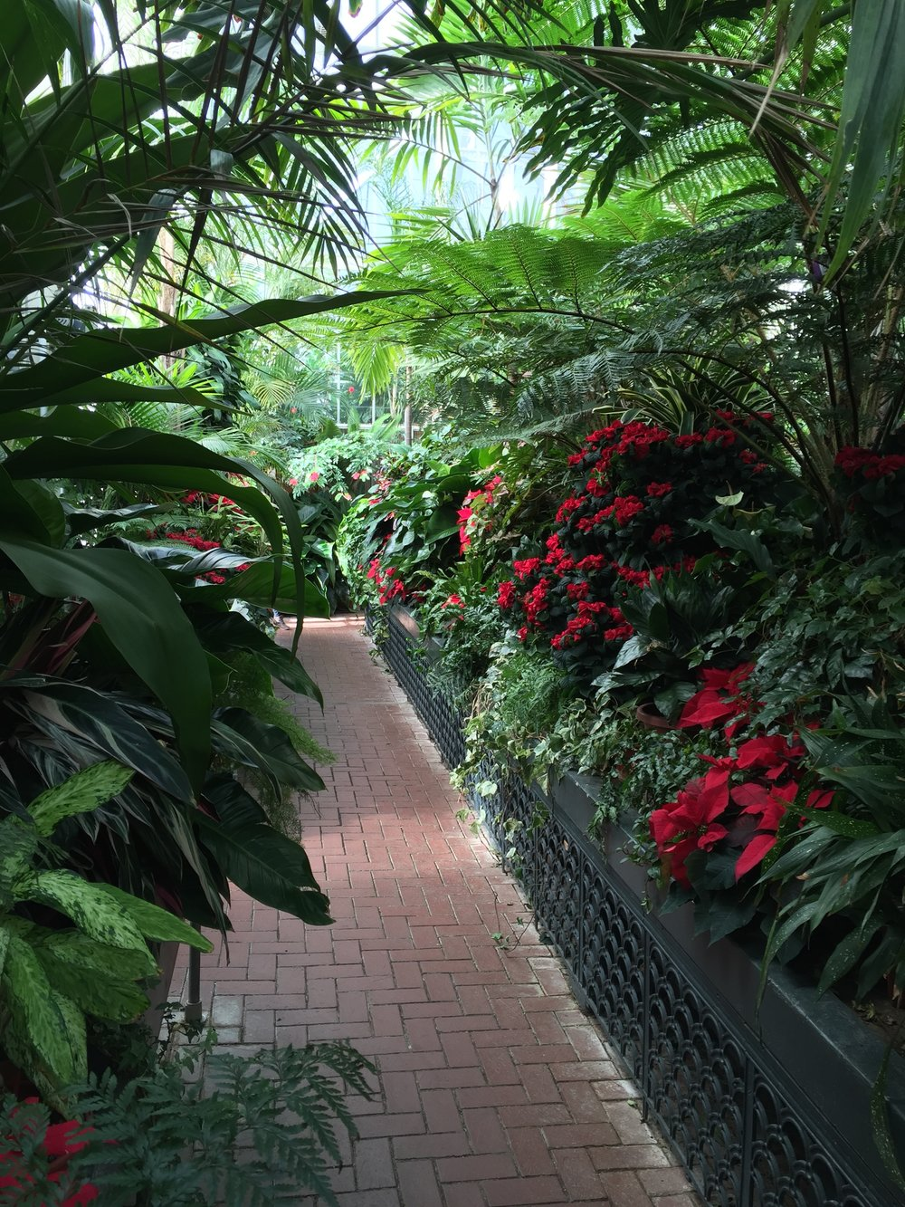 Inside the greenhouse in the adjacent botanical gardens.