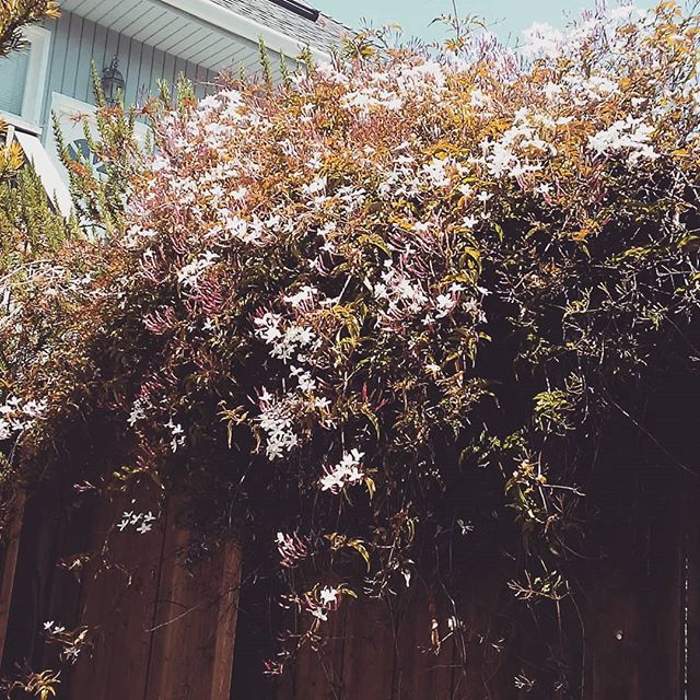 Happy Monday Y'all. Today I'm taking in some rare downtime. Rest is just as  important as the work.  And often its a struggle to allow myself to relax without feeling guilt or looking to the next thing. Making time for rest is just as important as making time for selfcare. #flex #sun #jasmine #backyard #thingsmyacupuncturistsays #sf #bayarea #selfcareishealthcare