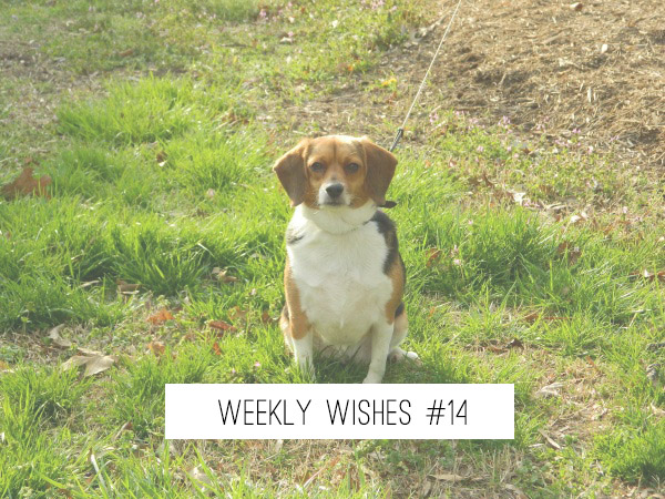 weekly-wishes-14