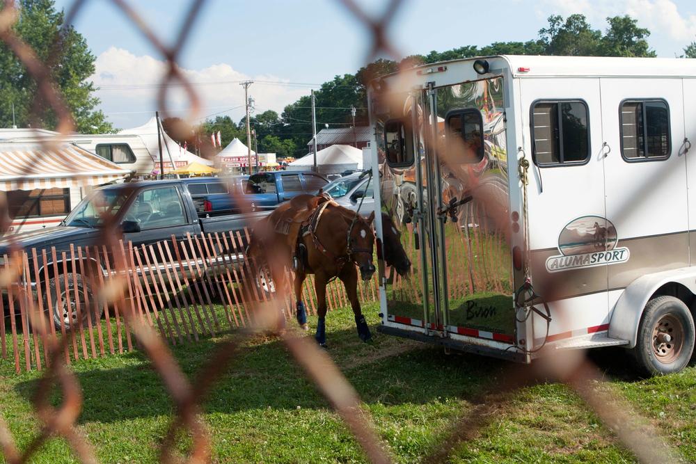 camera-shy horse (2 of 1).jpg