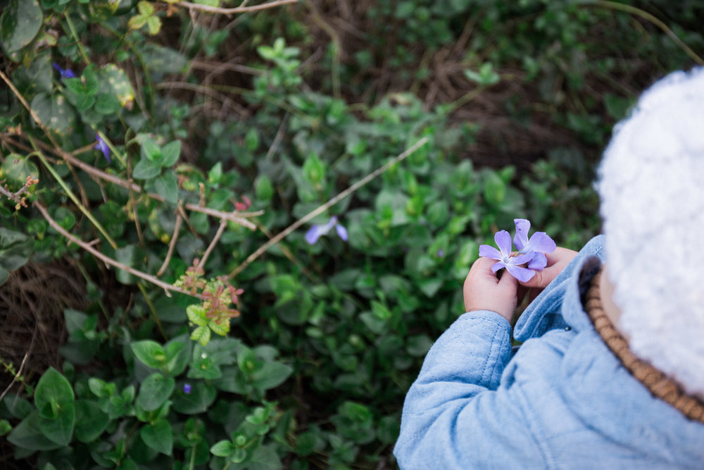 This little girl picked purple flowers every morning.