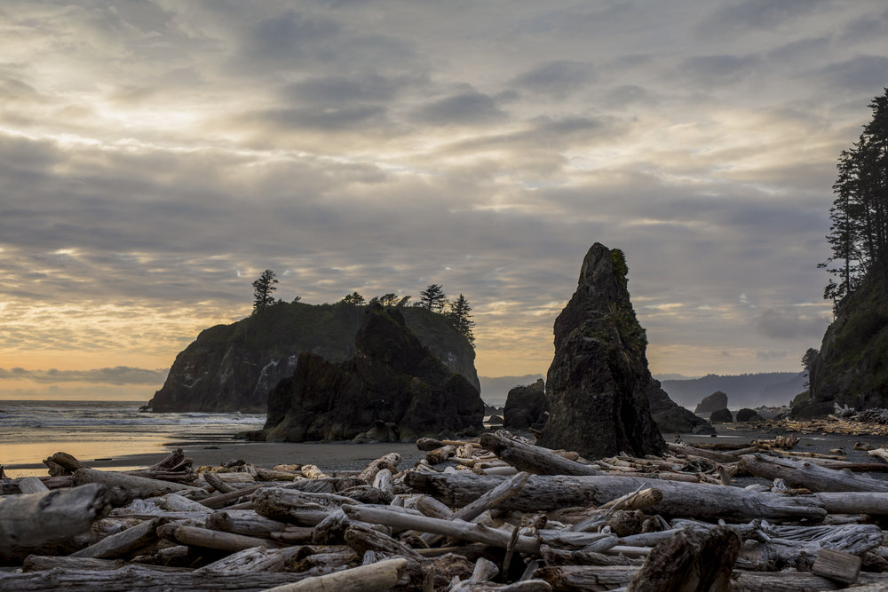 seattle, elopment, hoh rainforest, ruby beach, la push, pnw, pacific northwest-024.jpg