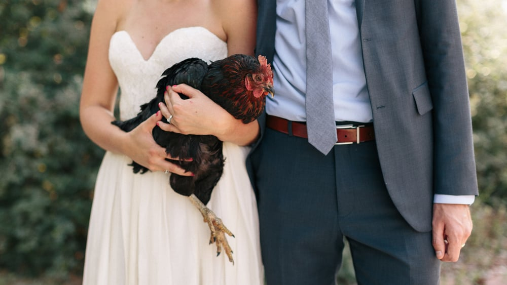 049-lyons-farmette-bride-and-groom-with-chicken-wedding-photographer.jpg