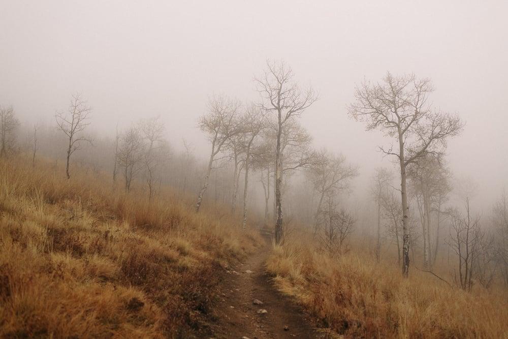 054-kenosha-pass-aspens-fog-colorado.jpg