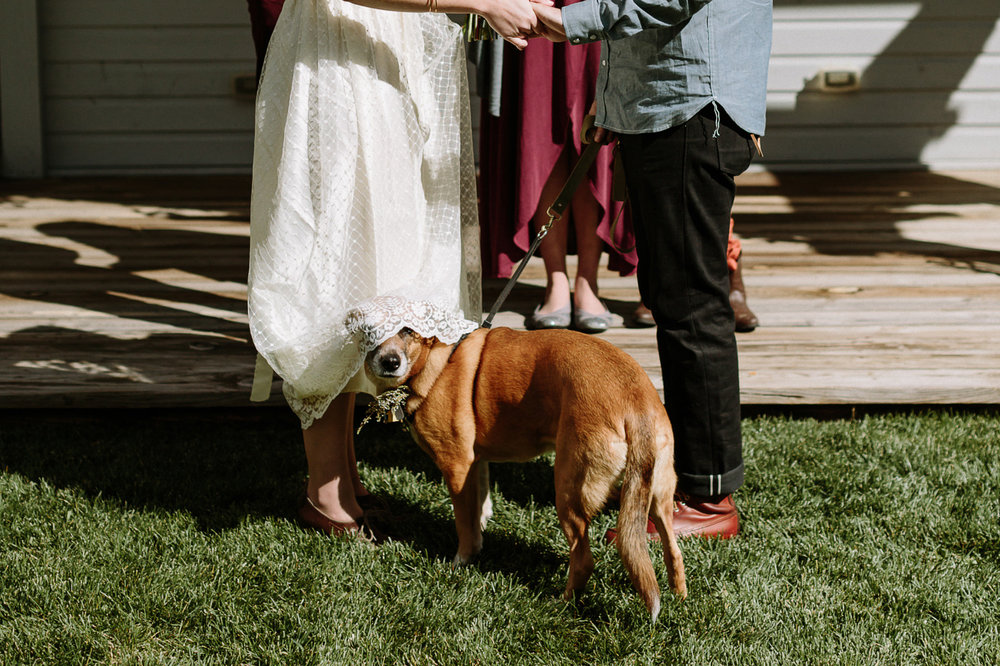 Dog under wedding dress during ceremony