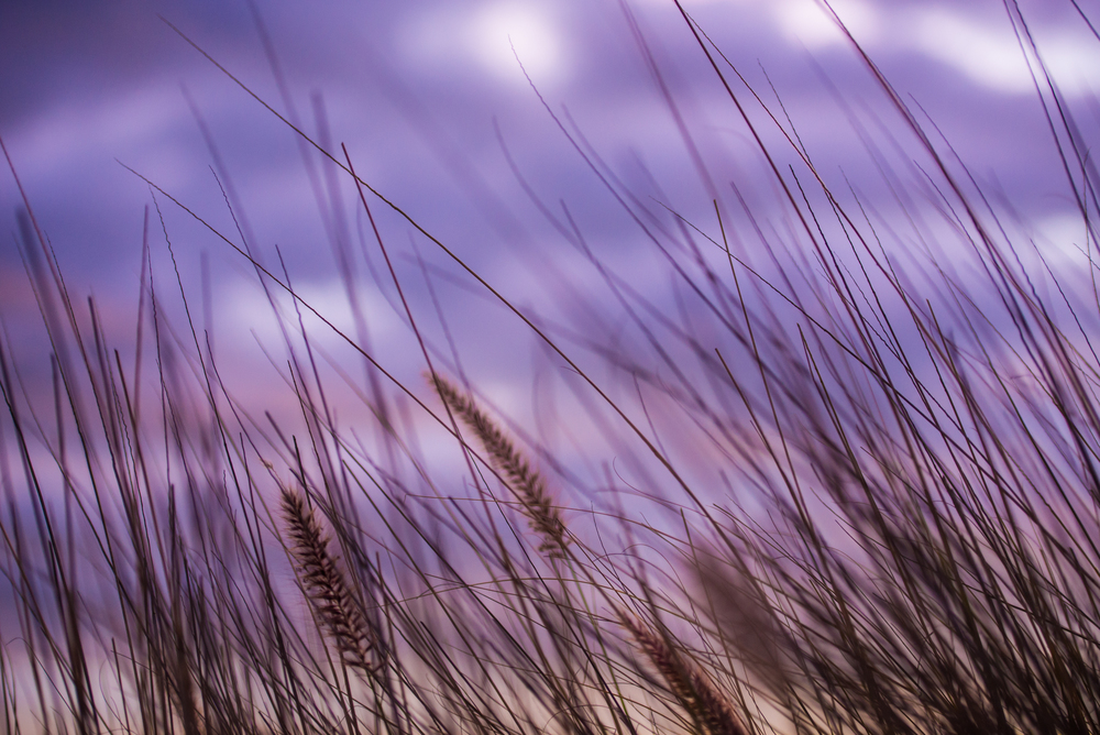 mikejbarbosa_landscape_010.jpg