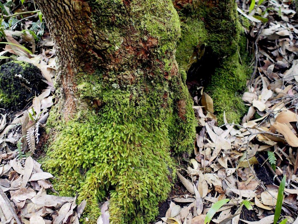 Rainforest walk2.jpg