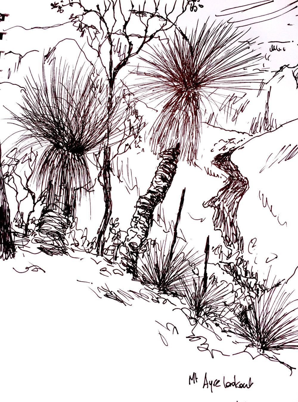 pen and ink drawing from Mt Ayre
