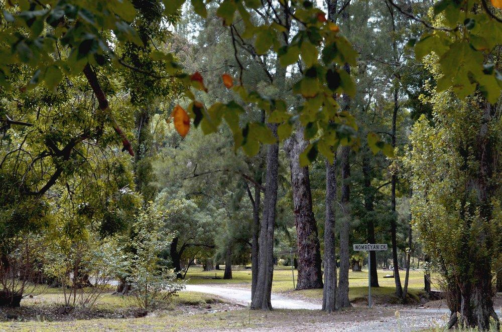 Wombeyan Creek