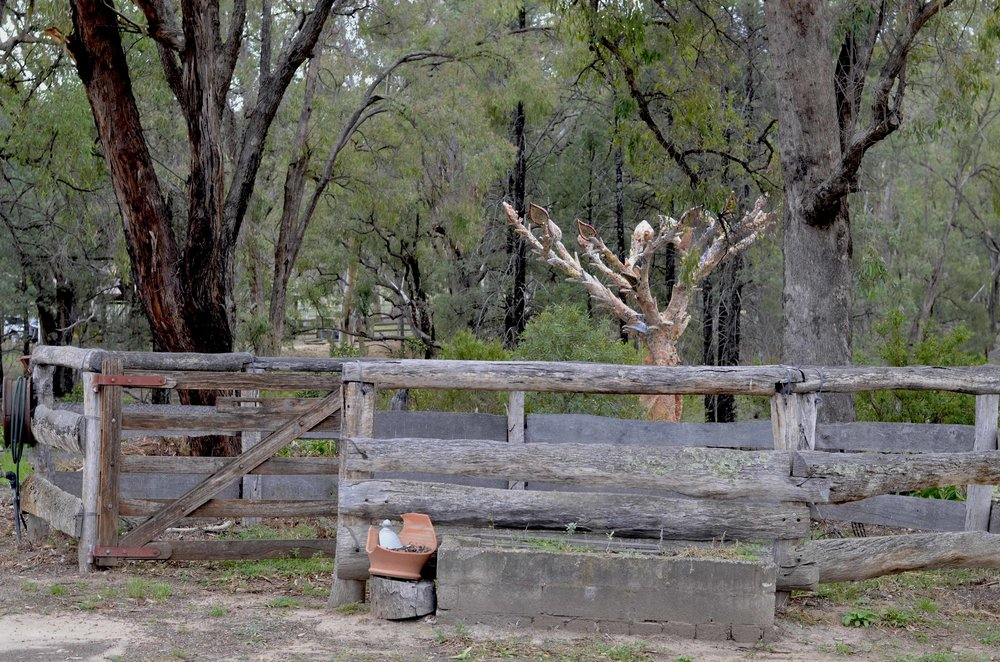 the ole corral with the p[ottery tree in the background.