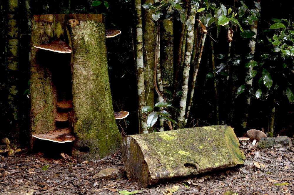 fungi shelving.jpg