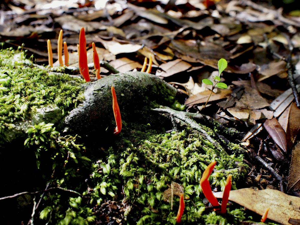 fungi 3.jpg