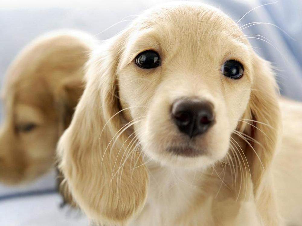 cani-per-recupero-psicologico.jpg