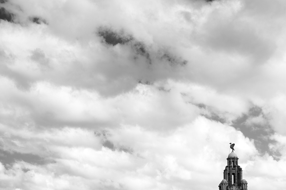OMC One Magnificent City Liverpool (35) Liver Bird Building.jpg