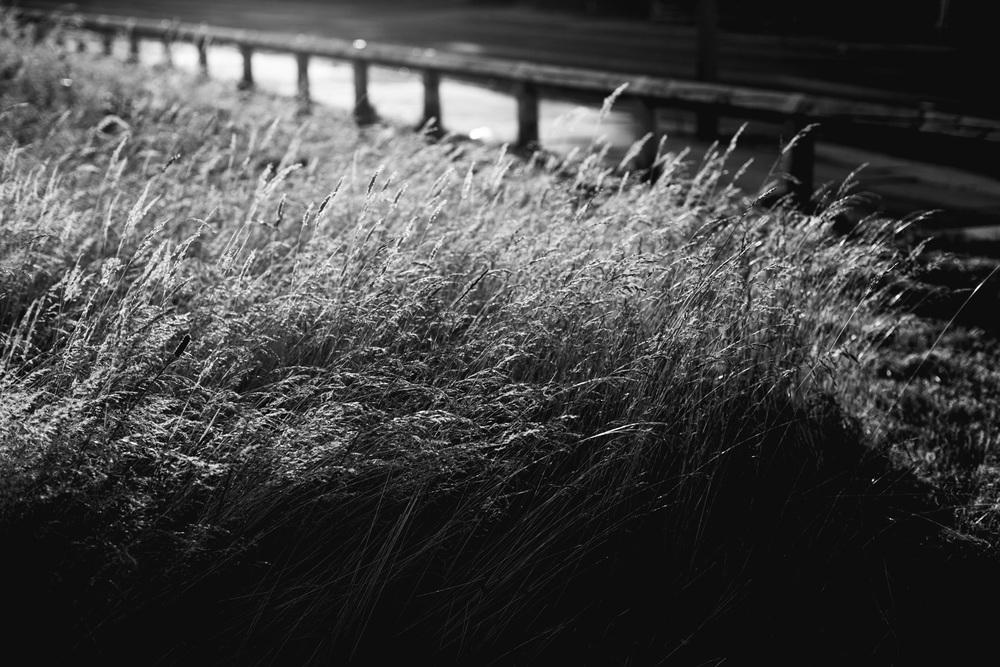 Andrew Wilson Photography Wavertree Liverpool (18).jpg