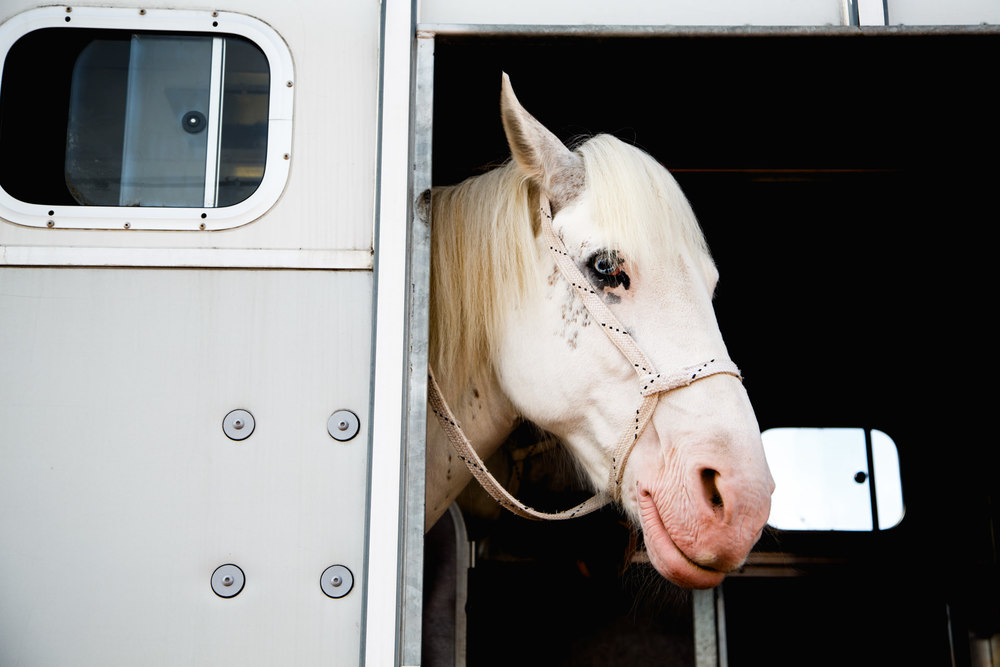 Andrew Wilson Photography Blackpool (30) Horse.jpg