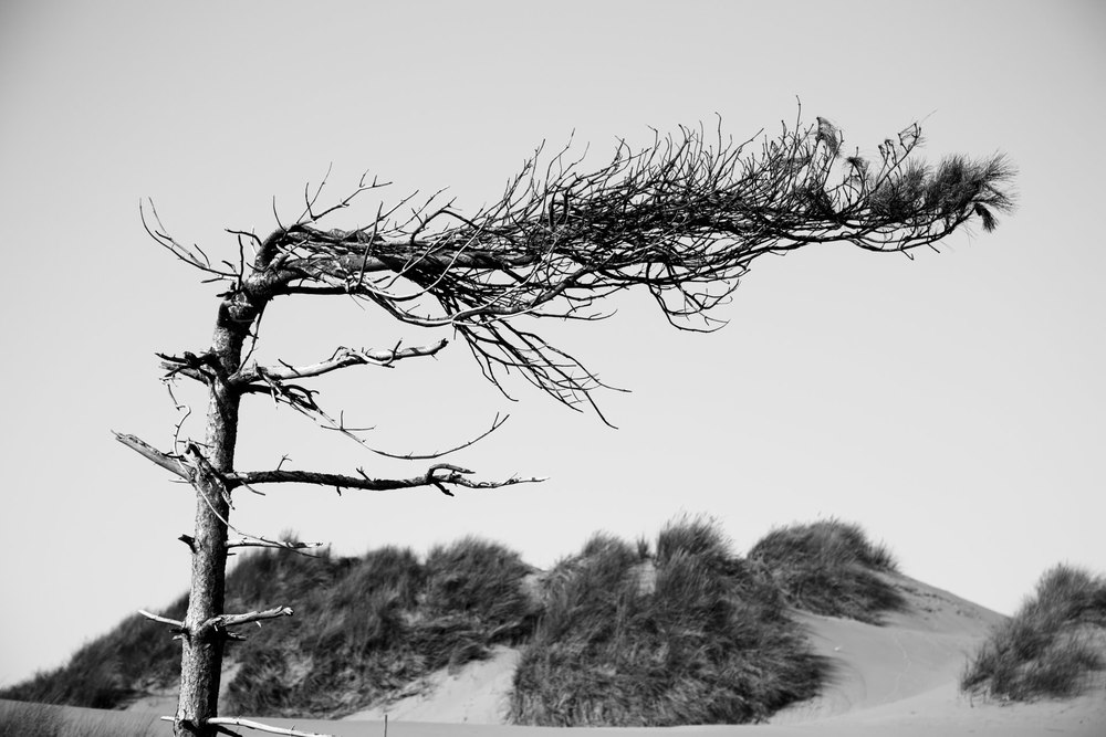 Andrew Wilson Photography Formby beach Liverpool (13).jpg