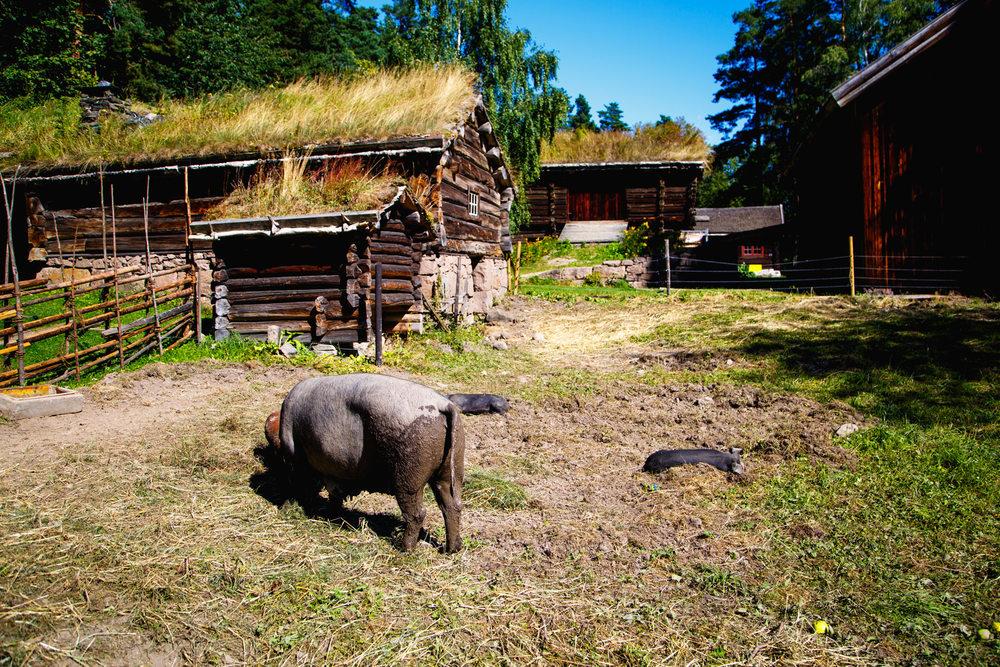 Andrew Wilson Photography Oslo Norway (45) Folkenmuseum.jpg