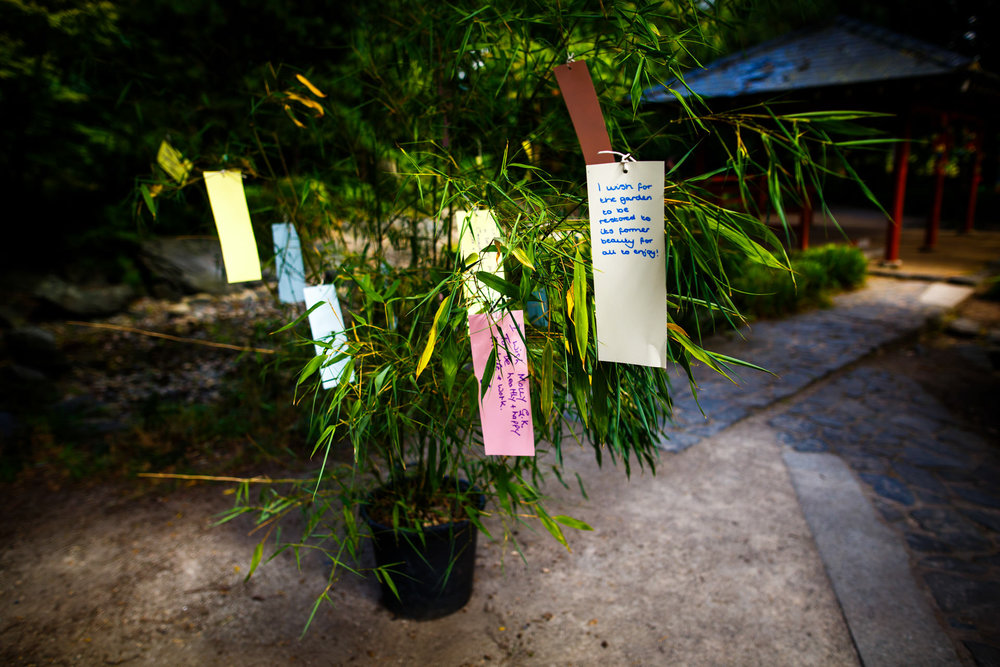 In the Japanese garden were Tanzaku (wish making on colourful strips of paper) as part of the Tanabata Festival.