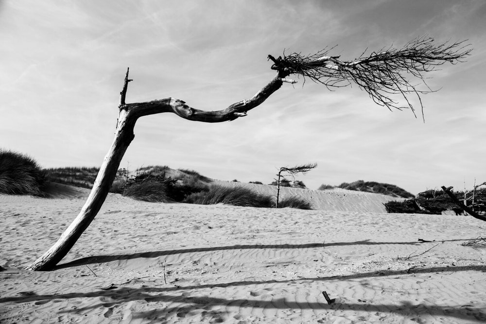 Andrew Wilson Photography Formby Beach Liverpool Tree