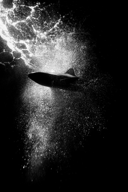Andrew Wilson Photography Birmingham - 17 - Sea Life Centre.jpg