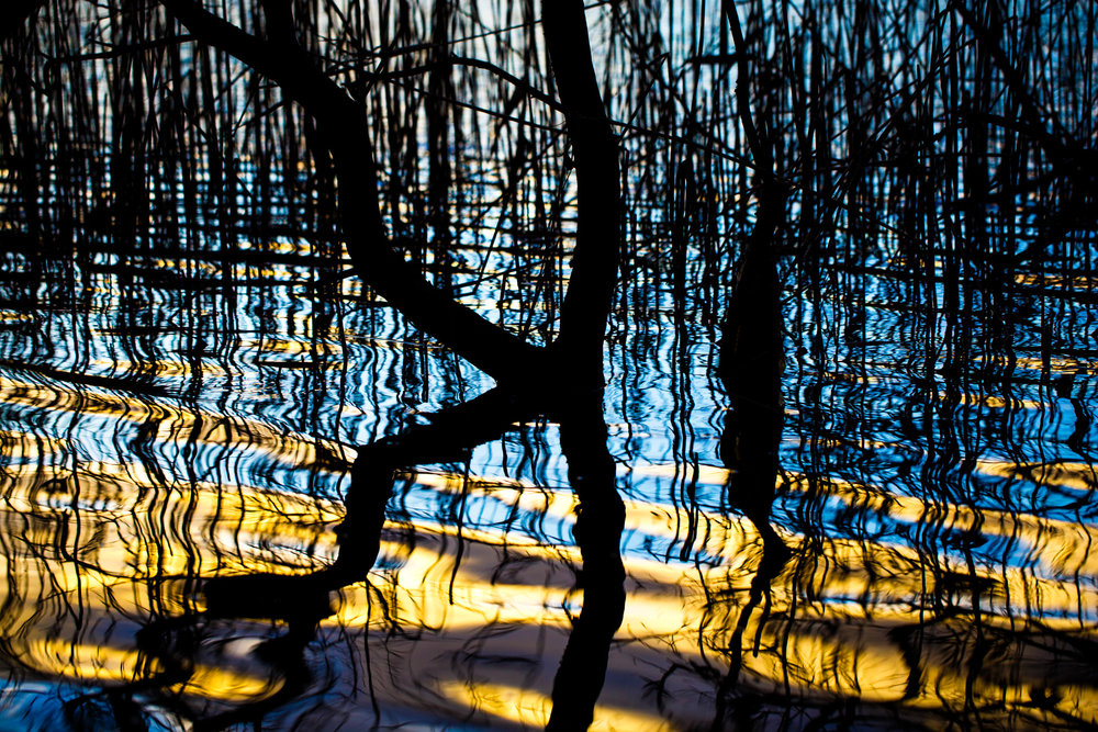 I spotted this collection of trees and reeds just off the path where the high water level created a busy reflection. I figured with a long exposure I might get an unusual looking photo...