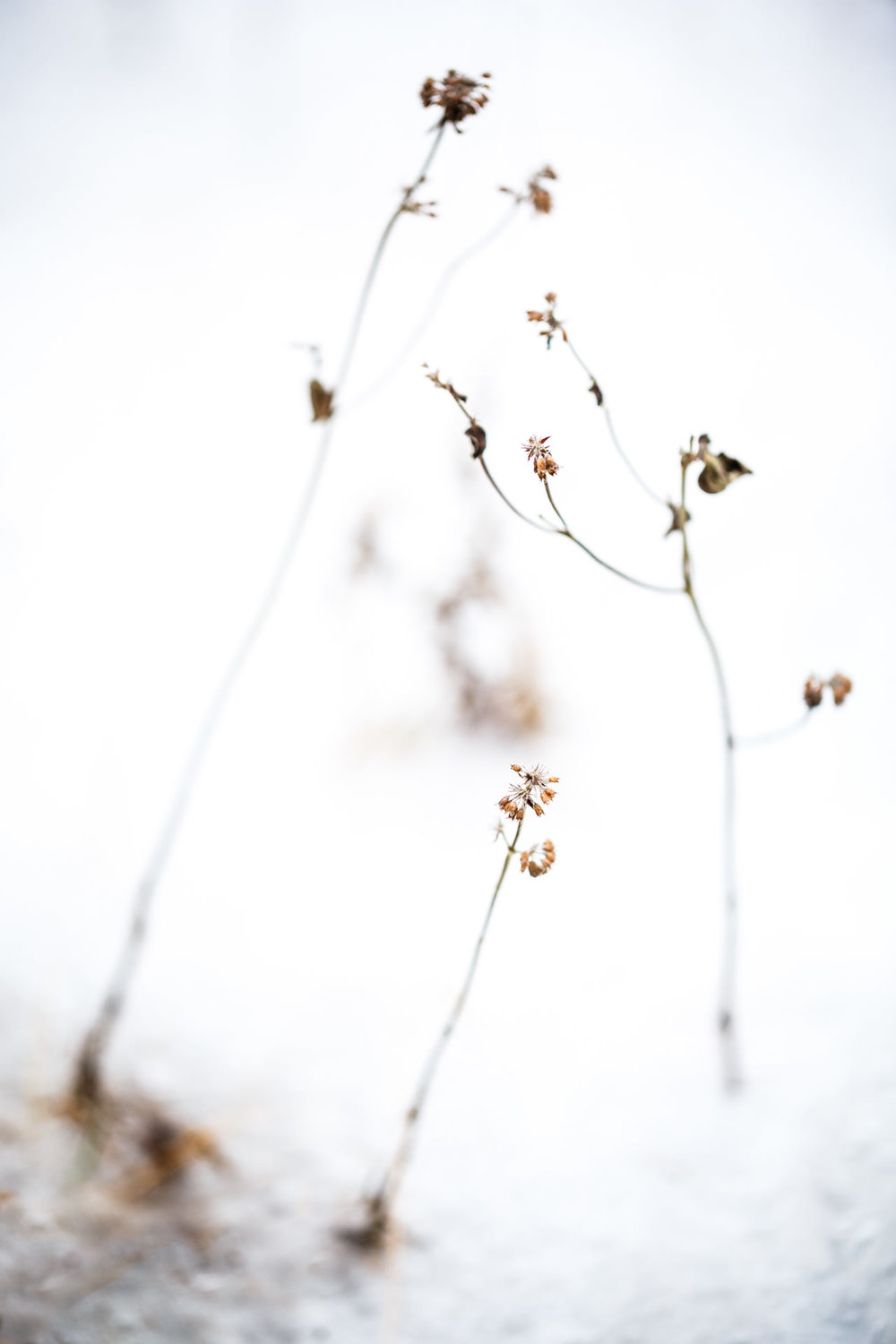 Here I was interested in the arrangement of the flowers surrounded by frost. I went with a shallow depth of field as I wanted to isolate the details from the background.