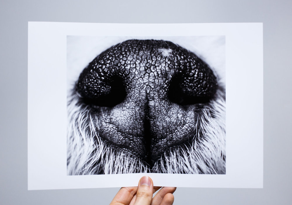 'Sniff-Sniff', printed on Fotospeed PF Lustre 275.