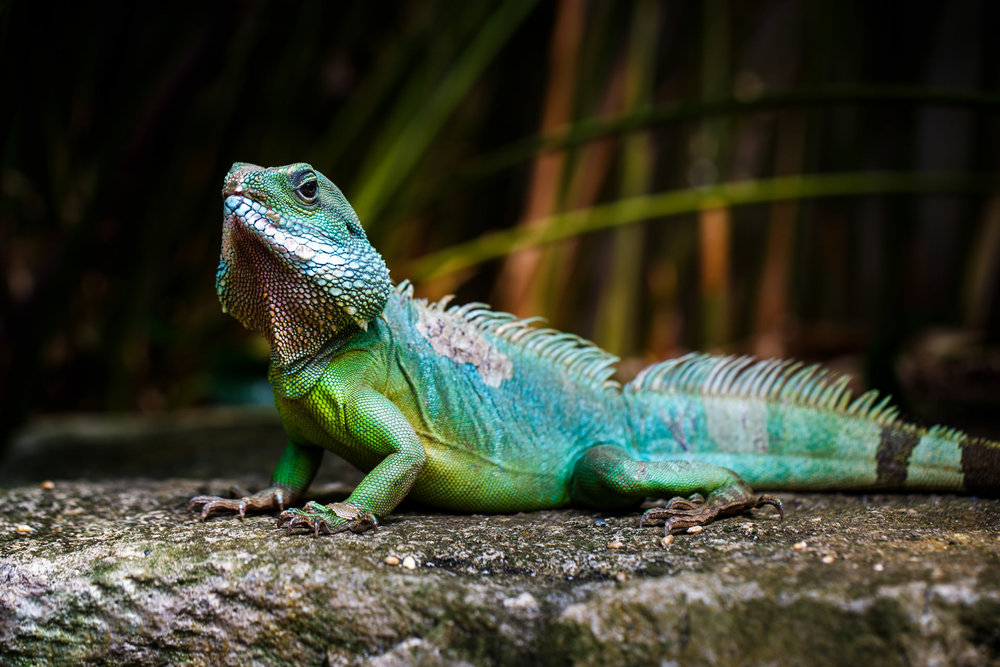 Something I remember about taking these photos of this iguana was the moment that led up to it...