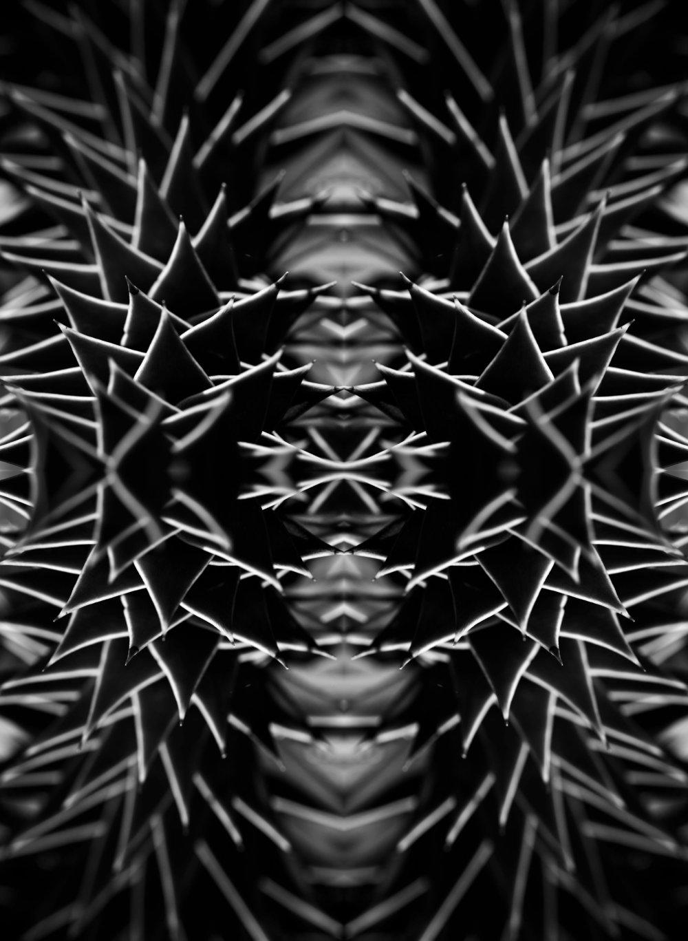 DV8A8862 collage 1_2.jpg