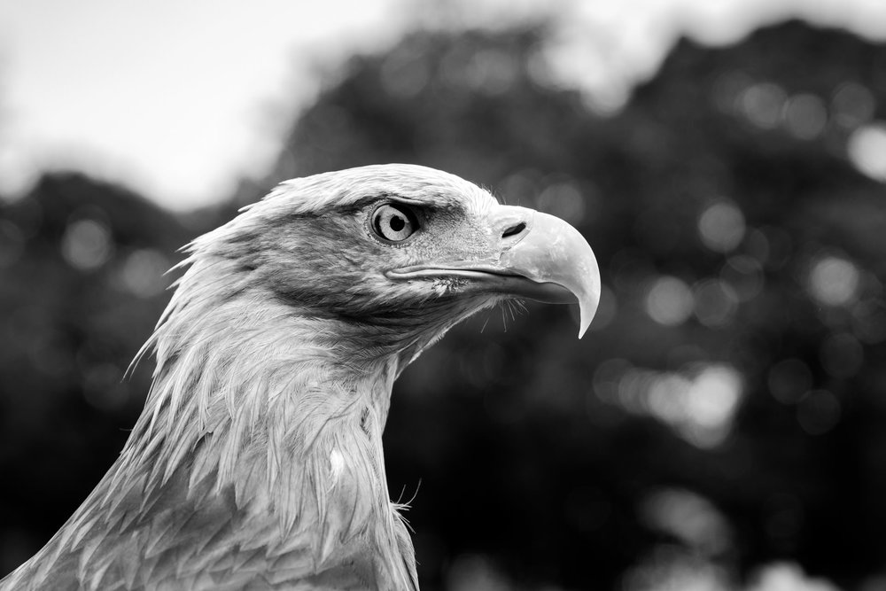..before going to Ashton Park where this eagle was on display.