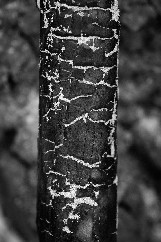 Charred wood.