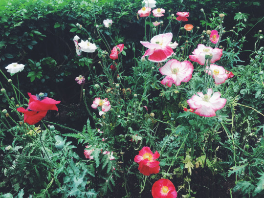 tumblr_oa8rroayfy1sgqr6xo2_1280.jpg
