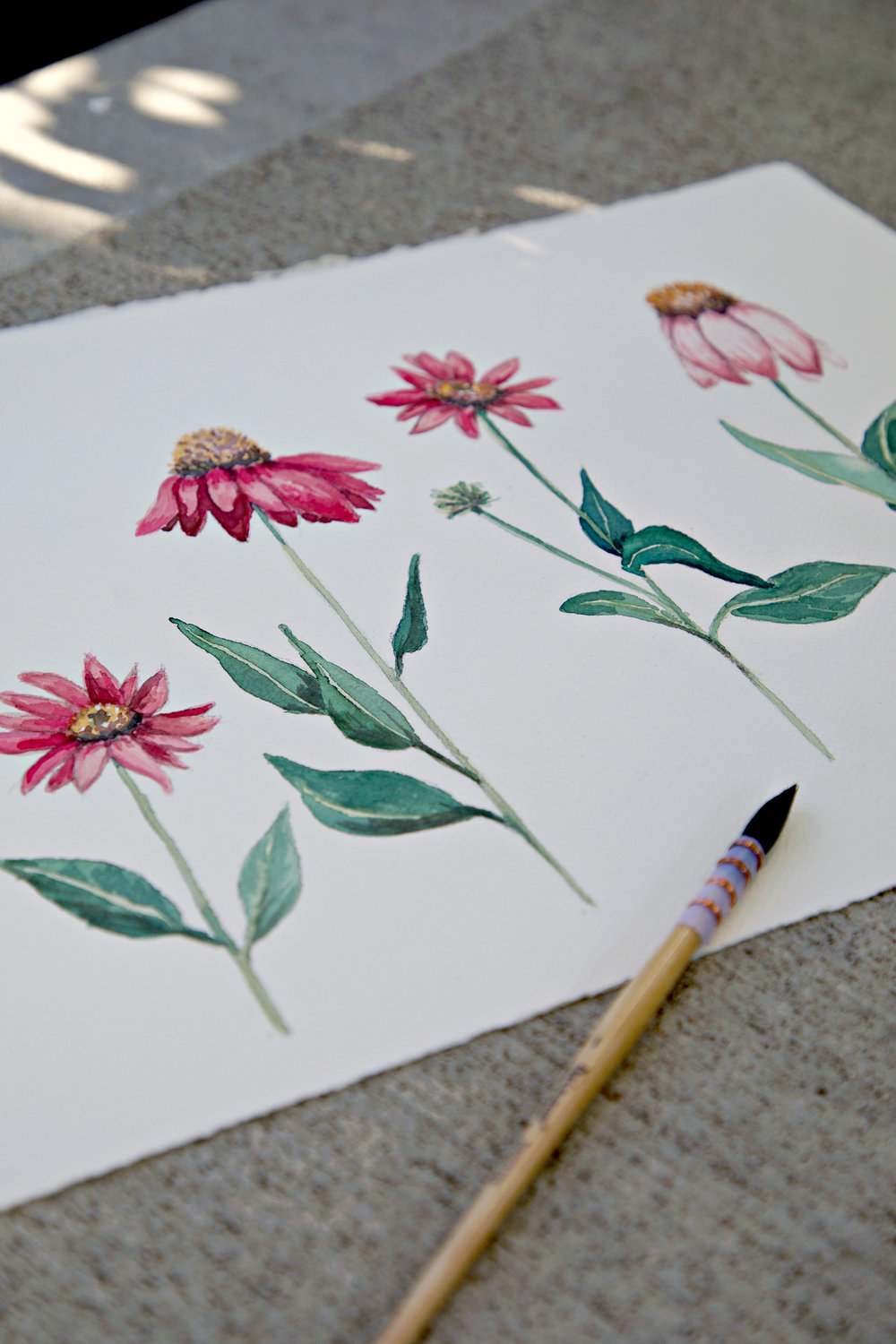 Coneflower Study by Sharon Holland
