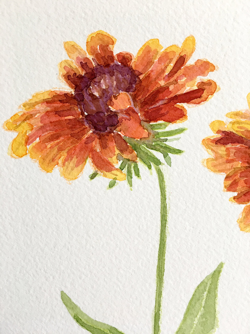 Blanket Flower by Sharon Holland