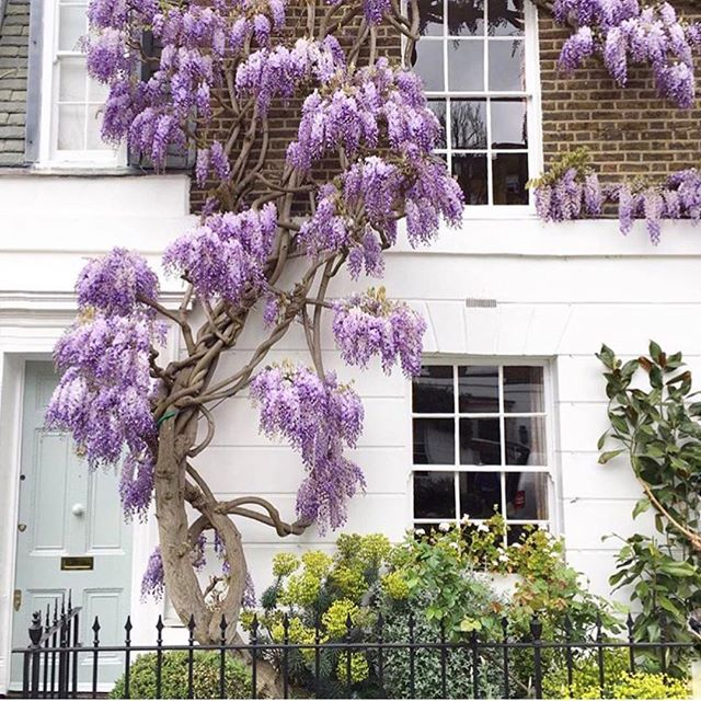 London you show off 💜 #spring
