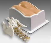 Lumbar Training Phantom, Model 034 Realistic lumbar spine anatomy to facilitate puncture practice phantom under fluoroscopy.