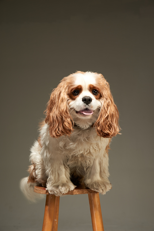 Dog Collar5952.jpg
